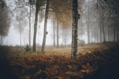 Hösten kräver lugn och mysmord