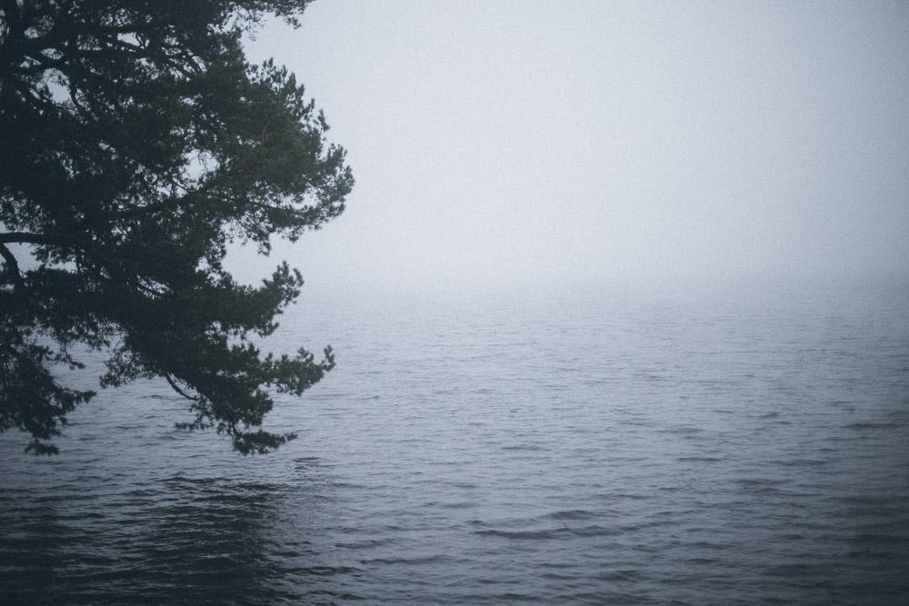 Träd över sjön