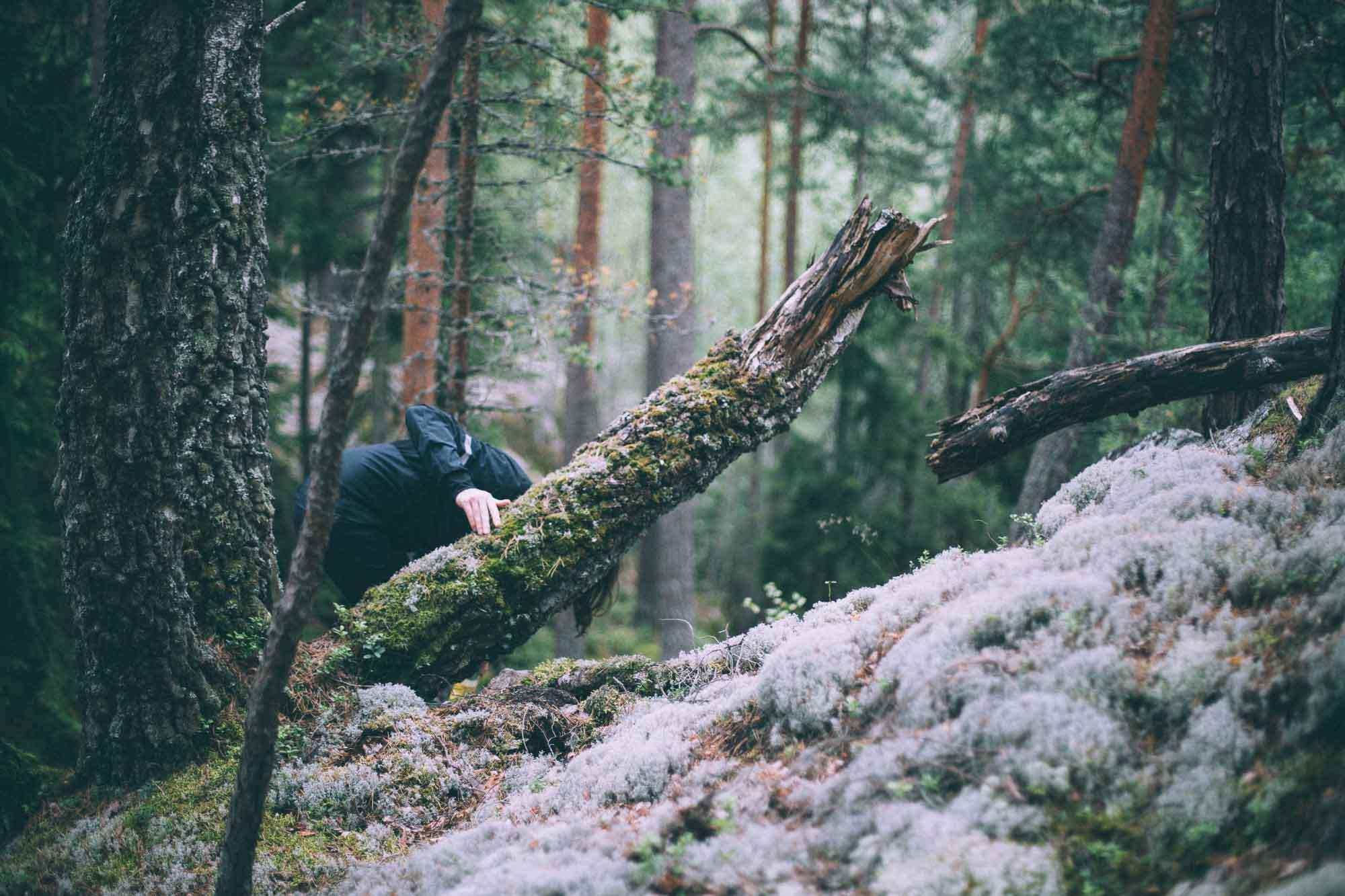 Sven bakom träd