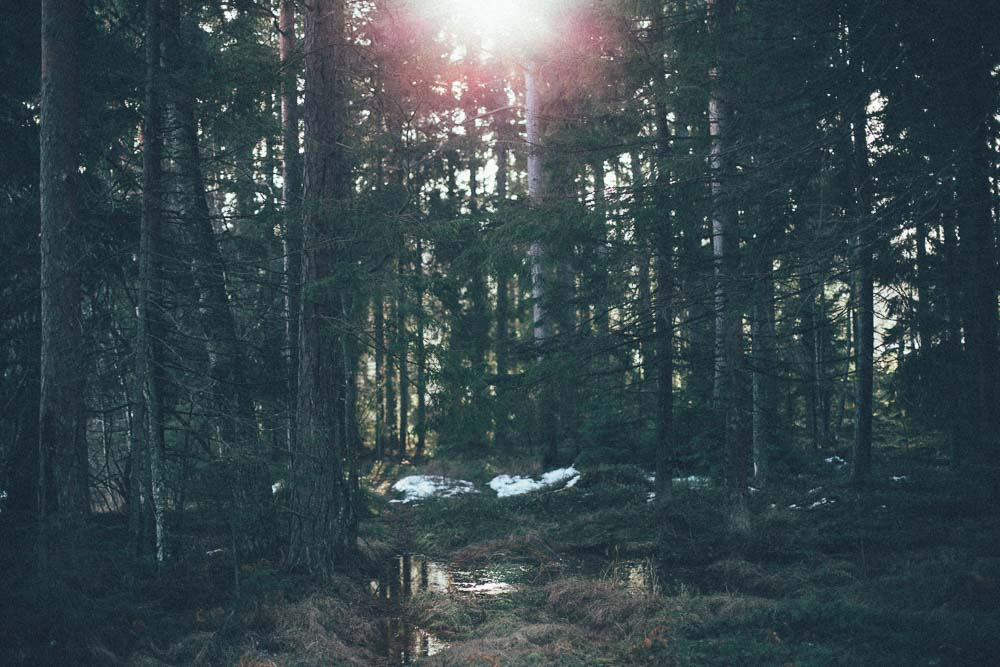 Sol genom skog