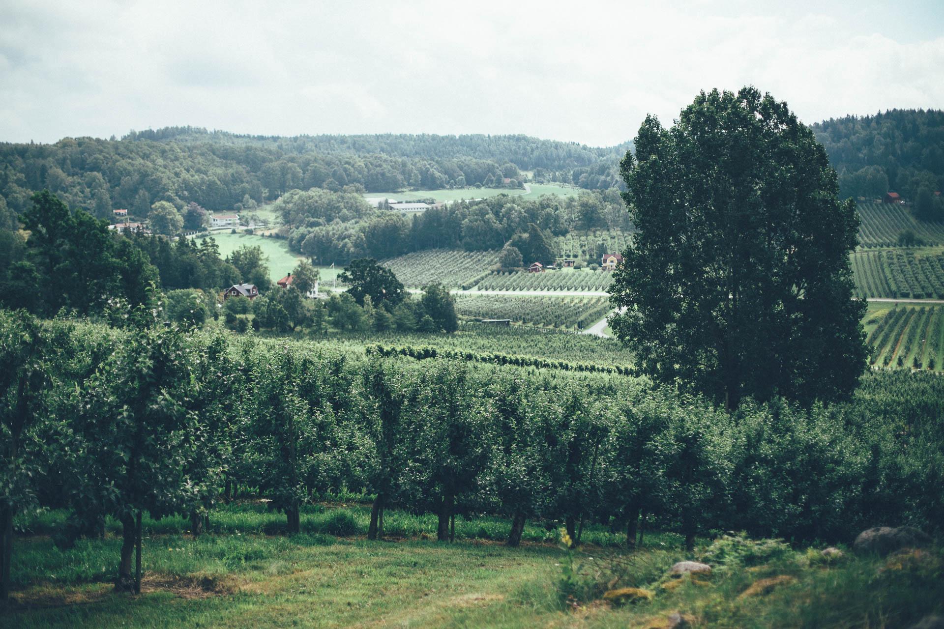 Äppeldalen