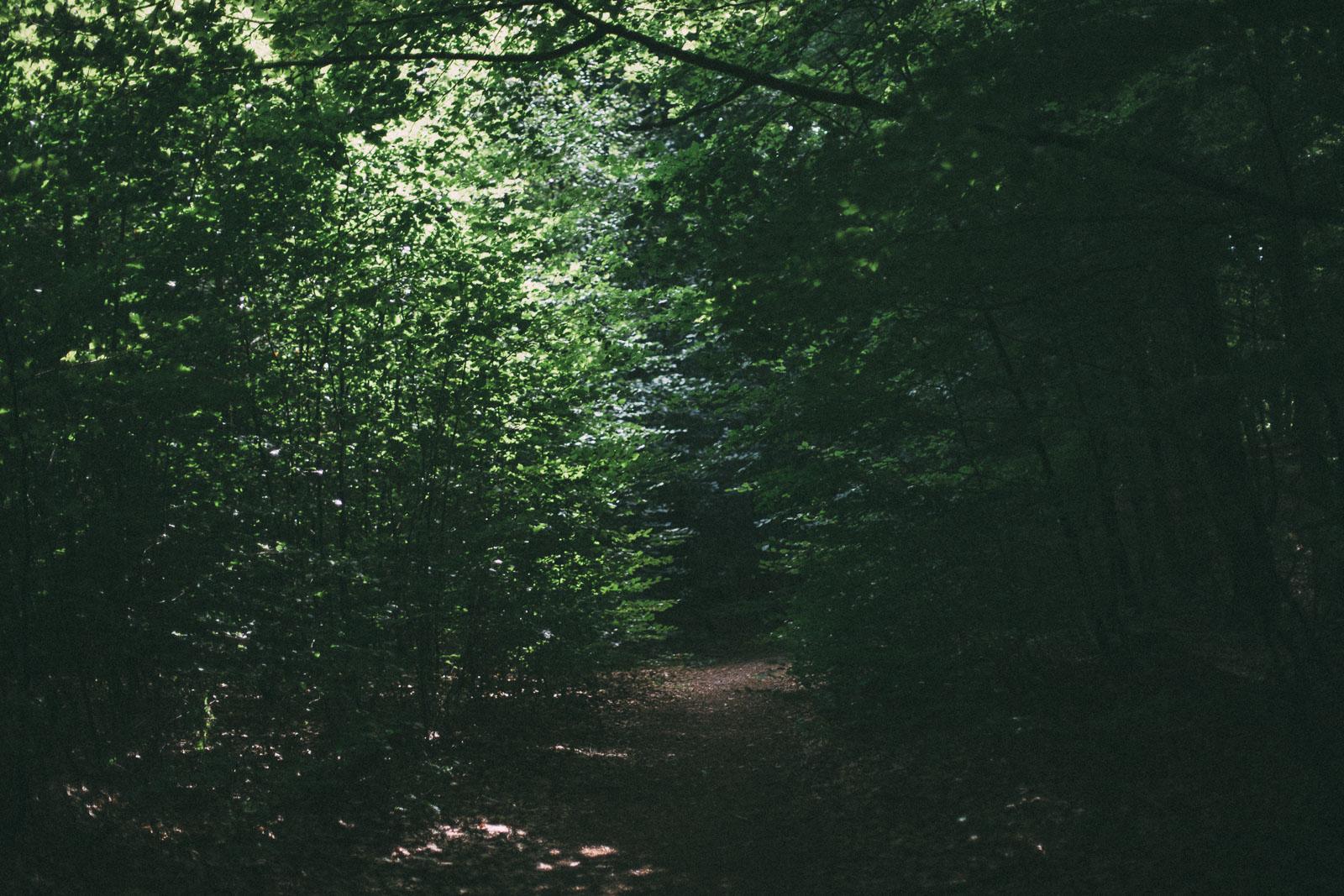Skogsgång